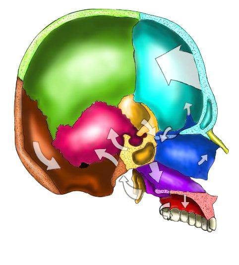 Crâne-sagittal-methode-poyet