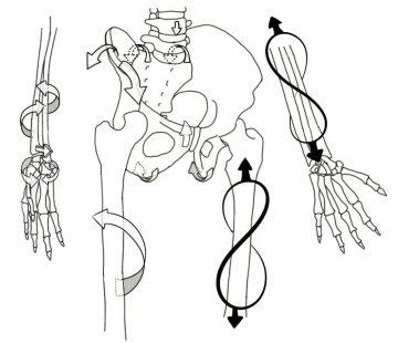 Squelette-Moyen